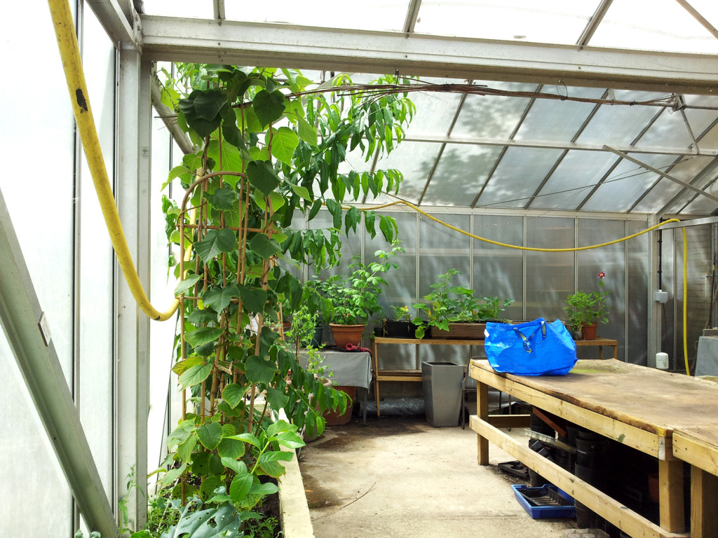 A look inside our greenhouse.