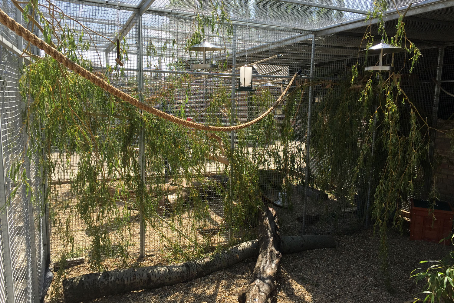 The aviaries are filled with enrichment for our birds.
