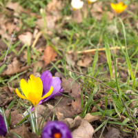 Keep an eye out for Spring bulbs!