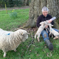 Farmer Tim Morris top-up bottle feeding triplets.