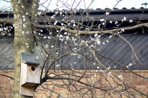 Blossom and bird boxes. Many birds can be spotted gathering nesting material, while others are already raising young.
