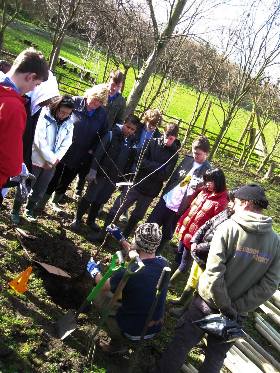 Planting our first apple tree!