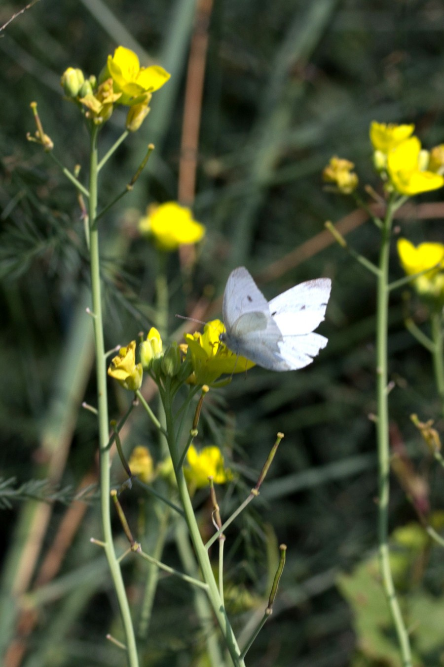 A small white butterfly.