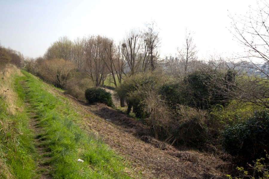 The brush and trees blocked light to the ground. Note the contrast between the bright green grass near the footpath!