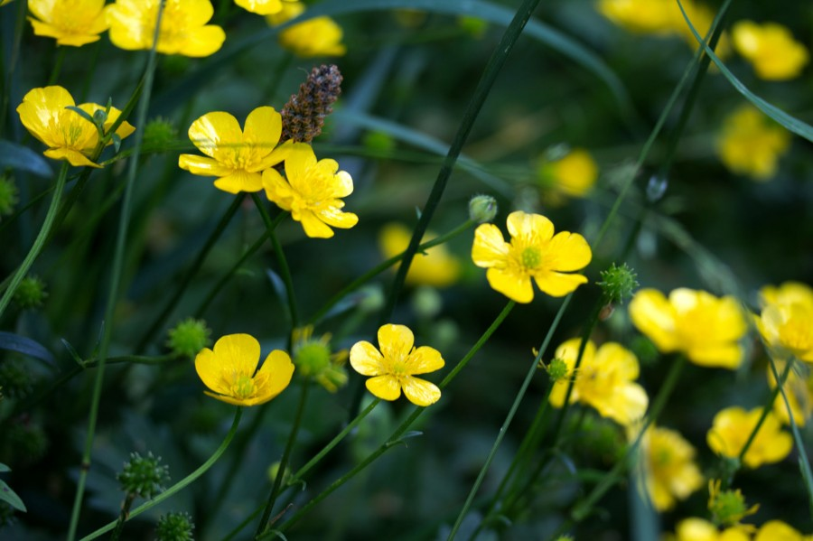 Keep an eye out for wildlflowers across the farm this month.