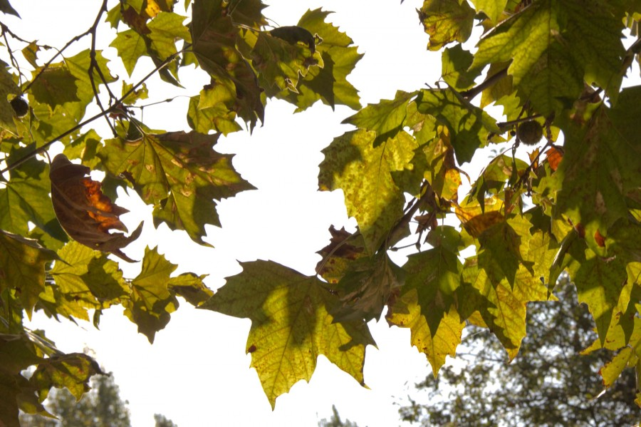 Across the farm, leaves are turning red and gold.