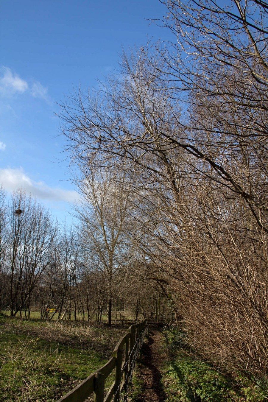 Blue skies and bare trees (but not for long).