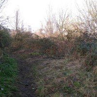 Flora will quickly claim the areas where brambles have been removed.
