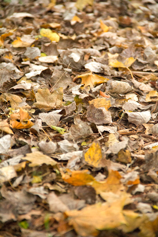 Lots of crunchy leaves across the farm!