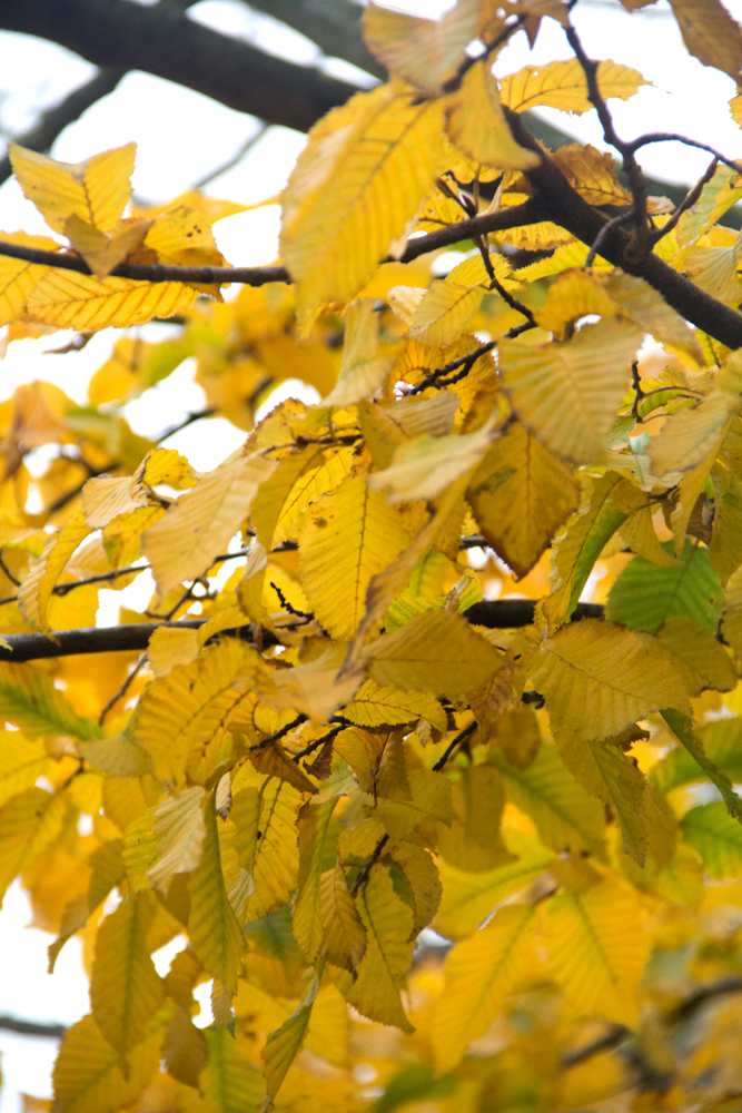 Keep an eye out for autumnal foliage!
