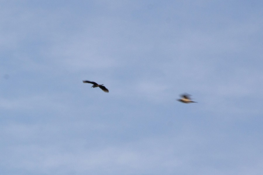 A grey heron (Ardea cinerea) flies over the farm, and a wood pigeon (Columba palumbus) crosses in the foreground.