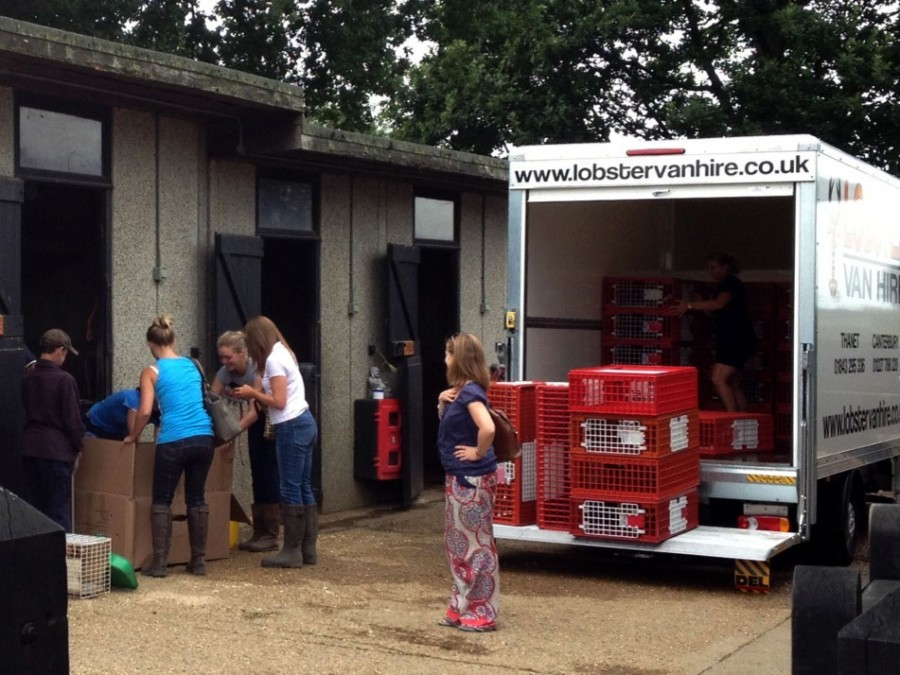 Picking up the rescued hens at Foal Farm.