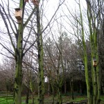 Bird boxes such as these may already have prospective residents investigating them. Their residents may include blue tits, great tits, sparrows and starlings.