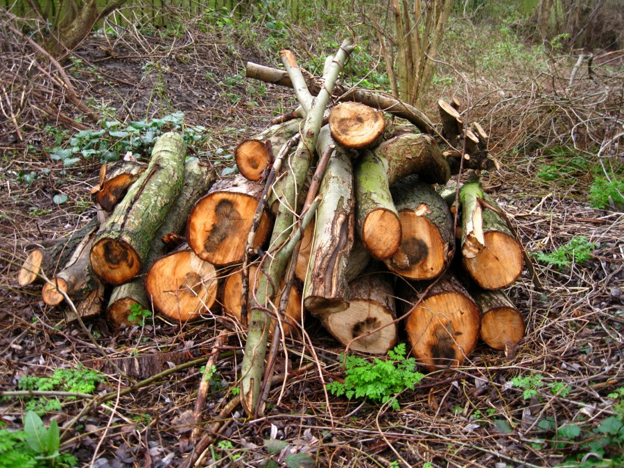 Winter is a busy time for management, with the felling of diseased tree and coppicing to encourage new growth.
