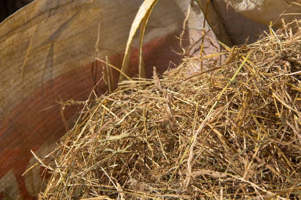 The hay will be used to feed many of our animals including sheep, cows and goats.