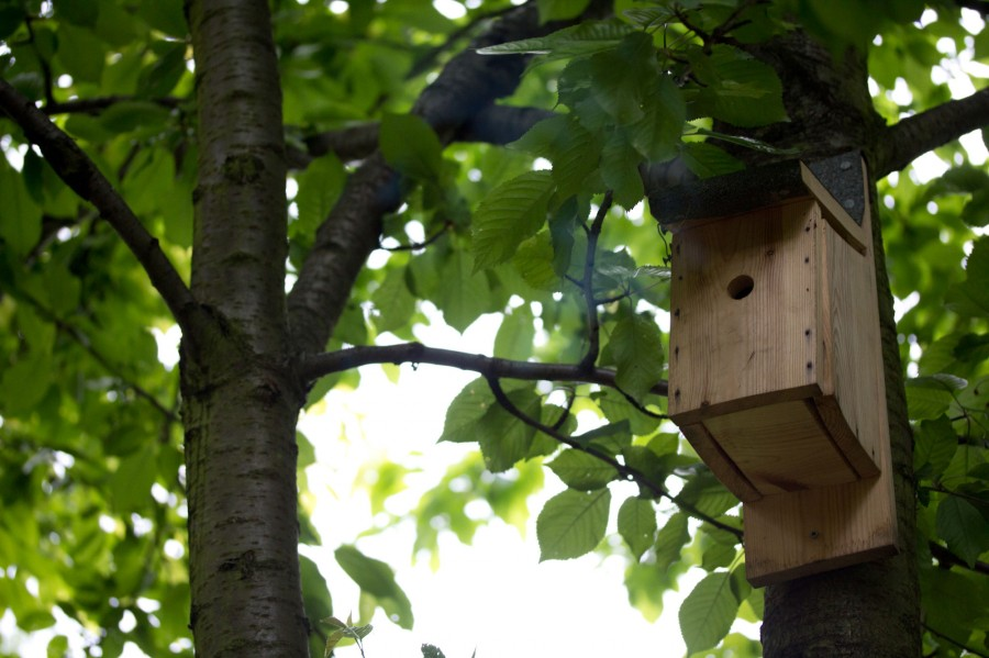 Many young birds will begin to leave the nest this month.