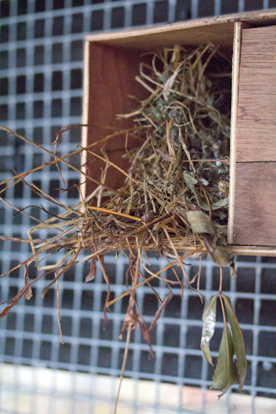 A tangled nest built at the entrance to the nest box rather than inside!