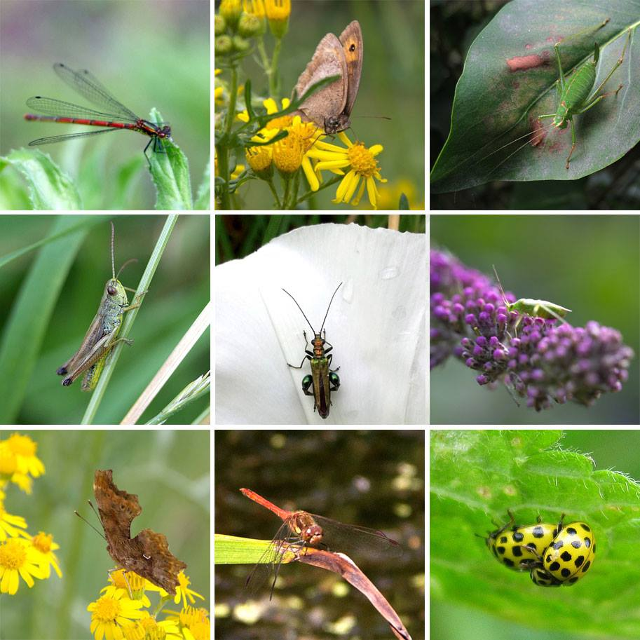 nationalinsectweek-mudchute2014