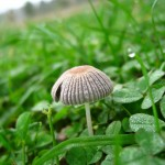 A small toadstool on the big field.