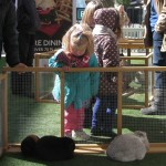 Rabbits and guinea pigs at Westfield
