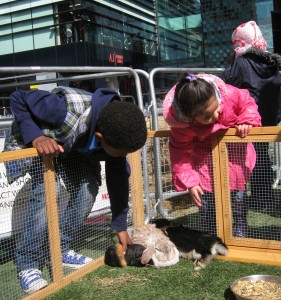 Petting Rabbits and Guinea Pigs