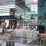Mudchute at Westfield