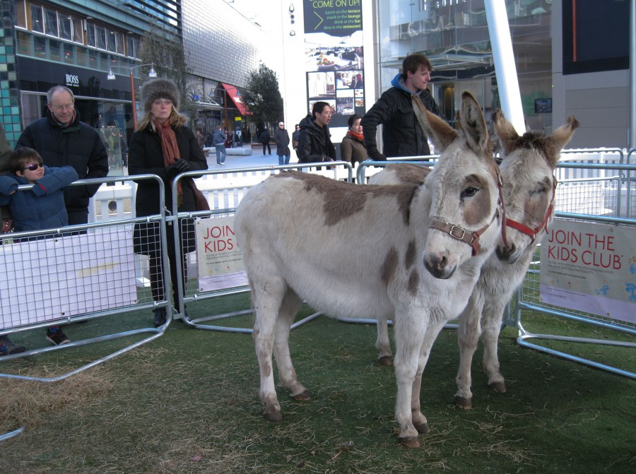 Dissy and Snowflake the donkeys