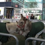 Donkeys at Westfield