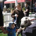 Sooty the lamb