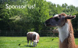 Sponsor Llamas and Alpacas